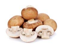 Champignon mushrooms Stock Image