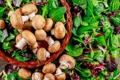 Champignon mushrooms, on a fresh salad leaves background. Champignon mushrooms, on a green fresh salad leaves background healthy lettuce organic vegetable stock photography