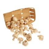 Champignon mushrooms isolated Royalty Free Stock Image