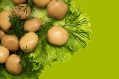 Champignon mushrooms in lettuce leaves. Photos in the studio Stock Photos