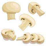 Champignon mushrooms. Vector illustration. Stock Images