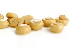 Champignon mushrooms on white Stock Photos