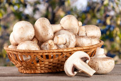 Champignon mushrooms in a wicker basket on wooden table with blurry garden background Stock Image