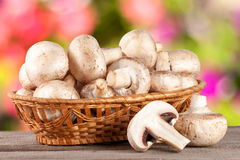 Champignon mushrooms in a wicker basket on wooden table with blurry garden background Royalty Free Stock Photo