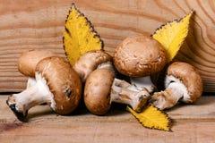 Champignon-Pilz auf hölzernem Hintergrund Stockbilder