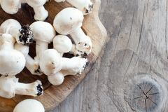 Champignon-Pilze auf einer Tabelle Lizenzfreies Stockfoto