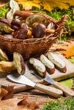 Champignon récemment récolté de forêt dans la mousse Photographie stock