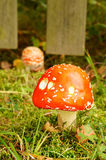 Champignon rouge Image libre de droits