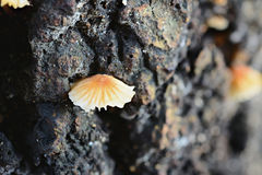 Champignon s'élevant du côté d'un tronçon d'arbre de décomposition Images stock