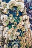Champignon sauvage Images libres de droits