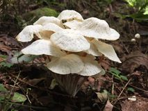 Champignon sauvage Photo libre de droits