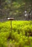 Champignon se levant au-dessus du lichen Photo stock