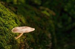 Champignon sur l'arbre tombé couvert par mousse image stock