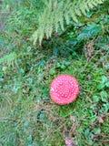 Champignon sur l'herbe verte Photo stock