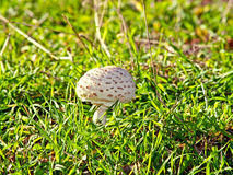 Champignon sur la forêt photos stock