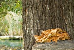 Champignon sur le tronc d'arbre Image stock