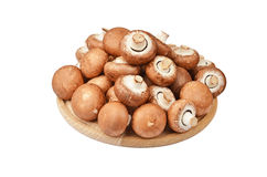Champignon (True mushroom) on wooden board Royalty Free Stock Image