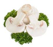 Champignonpaddestoelen op wit worden geïsoleerd dat Stock Afbeelding