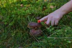 Champignons à l'herbe image stock
