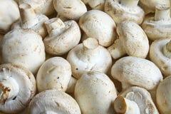 Υπόβαθρο από τα μανιτάρια champignons Στοκ Εικόνες