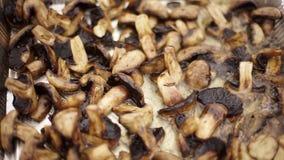 Champignons περικοπών είναι τηγανισμένα στο πετρέλαιο απόθεμα βίντεο