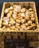 Champignons в деревянной коробке Стоковое фото RF