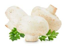 Champignons изолированные на белой предпосылке Стоковые Фото