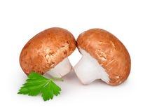 2 champignons при петрушка изолированная на белой предпосылке Стоковое Изображение