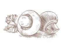 2 champignons с петрушкой Стоковые Изображения RF