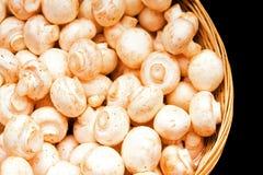 champignons Стоковое Изображение RF