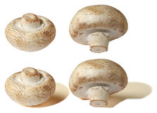 Champignons. Isolated, champignons on a white background Stock Images