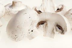 champignons Royalty Free Stock Photography