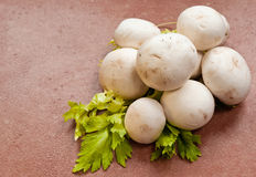 Champignons Images stock