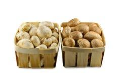 champignons Стоковое Фото