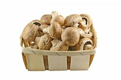 Champignons Royalty Free Stock Images