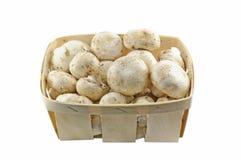 champignons стоковые изображения rf