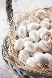 Champignons Image stock