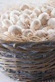 Champignons Photographie stock