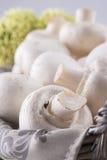 Champignons Photo stock
