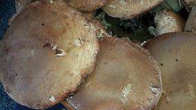 Champignons ! Photo libre de droits