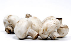 champignons Στοκ φωτογραφία με δικαίωμα ελεύθερης χρήσης