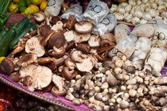 Champignons asiatiques Photos stock