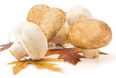 Champignons and autumn maple leaves Royalty Free Stock Photography
