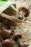 Champignons avec le sac de toile sur la paille Photo libre de droits