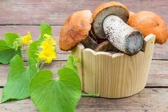 Champignons avec les chapeaux oranges (Leccinum Aurantiacum) dans un Bu en bois image libre de droits
