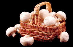 Champignons in a basket. On a black background stock photo