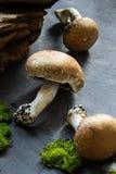 Champignons, bois et mousse sur le fond d'ardoise Photographie stock libre de droits