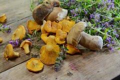 Champignons, boletus et thym de chanterelle sur la table en bois rustique Fond frais cru de champignon de chanterelle Photos libres de droits
