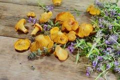 Champignons, boletus et thym de chanterelle sur la table en bois rustique Fond frais cru de champignon de chanterelle photos stock
