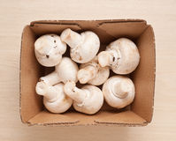 Champignons in box. Stock Image